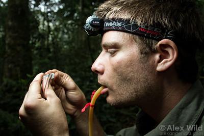 Sean McKenzie (Rockefeller University) examines a collection at Ant Course 2012 in Uganda.