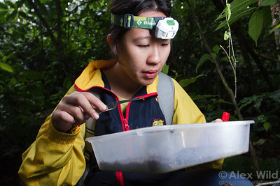 Eunice Soh sorts through leaf litter at Ant Course 2012 in Uganda.