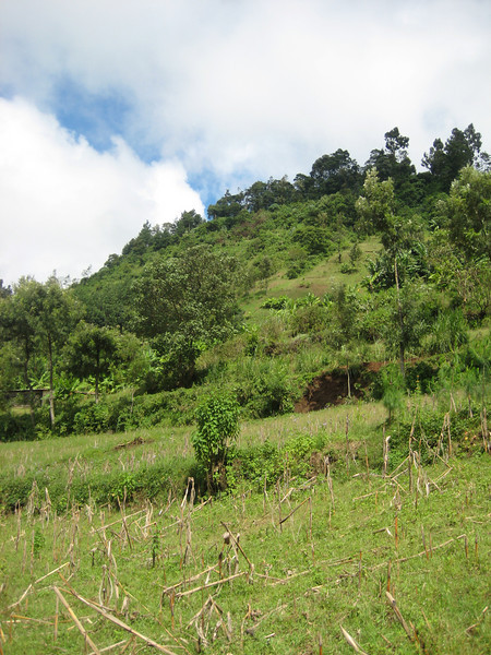 D16 Mt meru countryside
