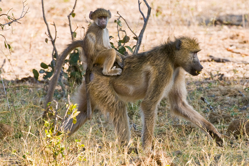 African Safari 2008