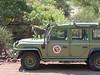 Baboon on hood of vehicle