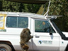 Baboon leaving our vehicle
