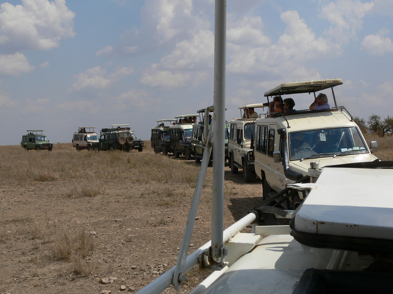 vehicles watching the cheetah