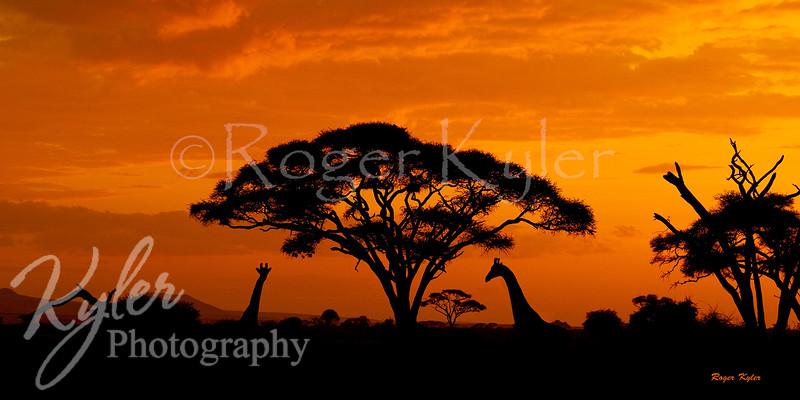Gifaffe_sunset