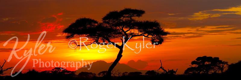 Amboseli_0254