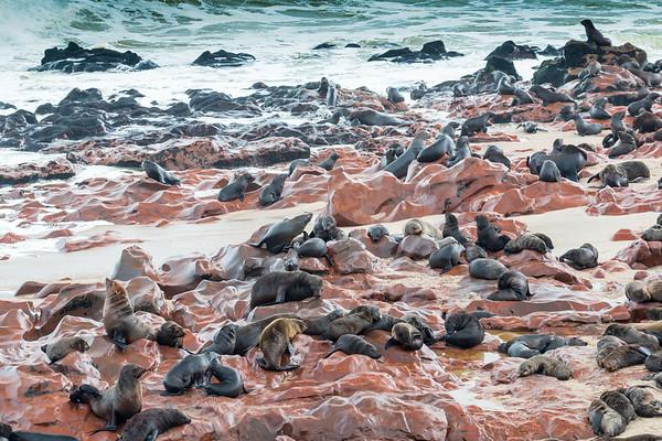 Cape Cross Breeding Colony