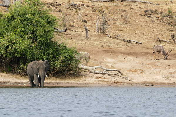 Chobe National Park Botswana, June 2014