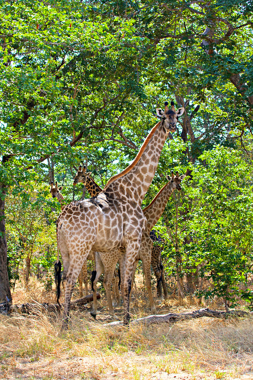 Chobe National Park June 2014