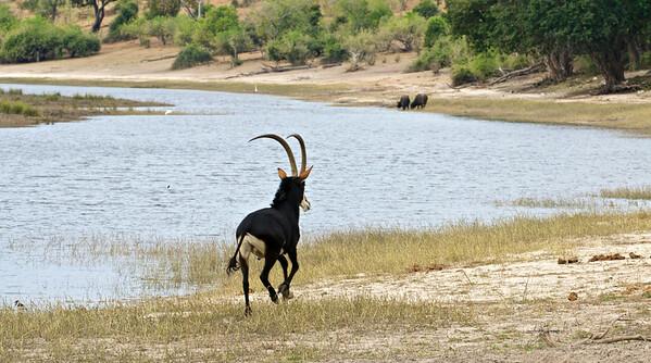 Chobe, Botswana June 2014