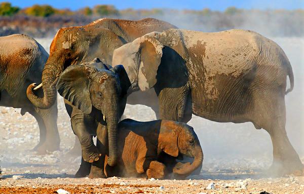Mud and dust bath, Etosha National Park