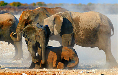 Mud and dust bath, Etosha National Park