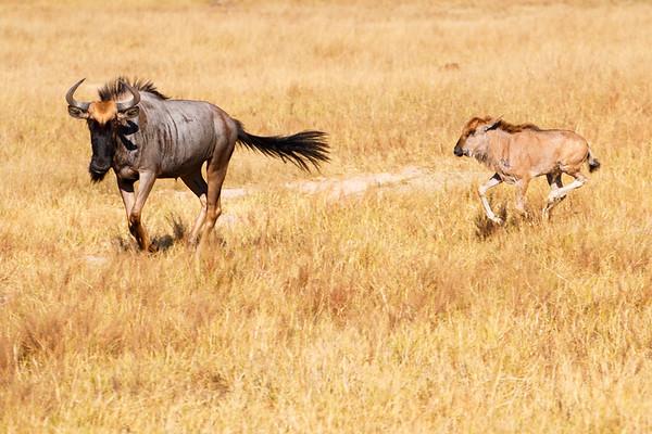Hwange National Park
