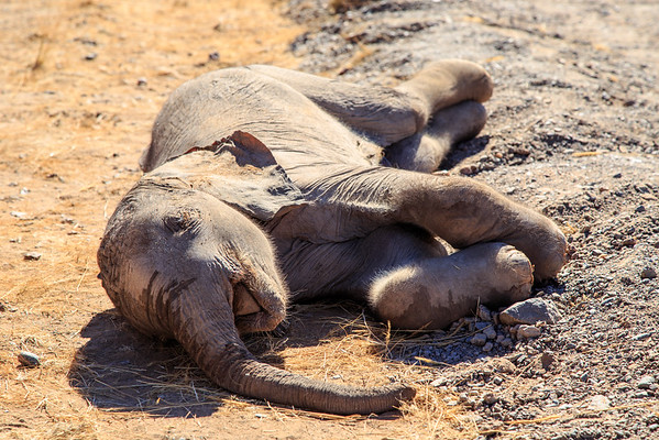 Sad sight of an infant elephant on the side of the road.