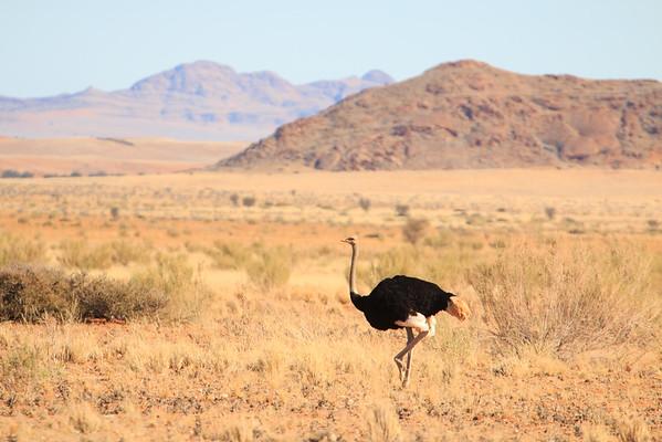 Nambib-Naukluft National Park