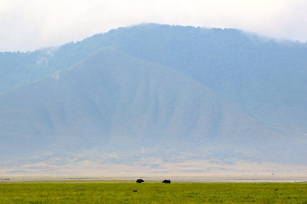Two (very endangered) black rhinos in the distance.