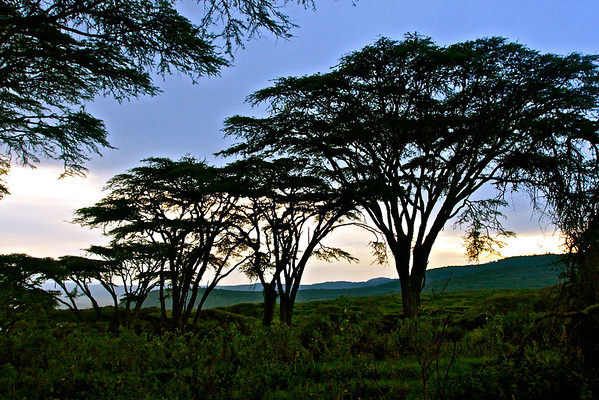 Near Ngorongoro
