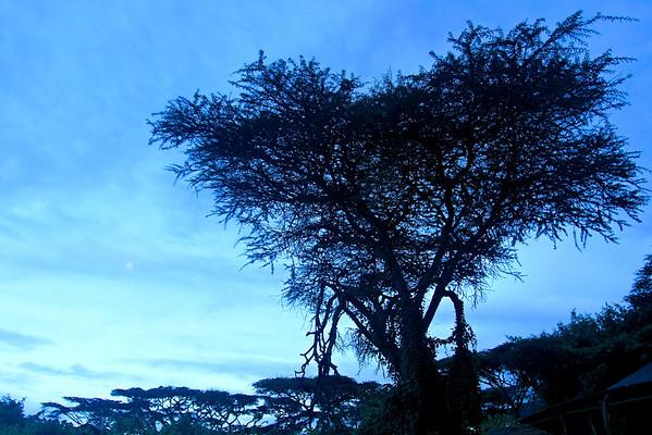 Ngorongoro Crater Tanzania, March 2012