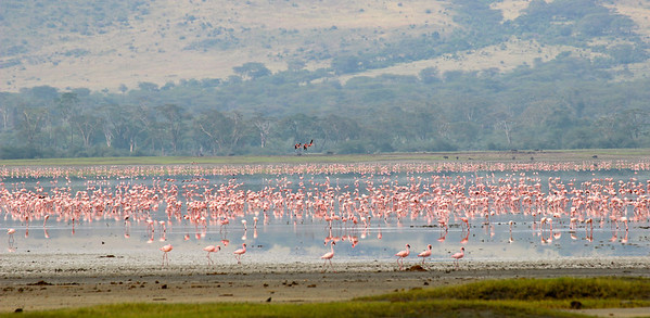 This was the only time I lamented not having a more powerful zoom-- it was a gorgeous vista, with jackals running along the bank and marabou storks devouring flamingos.  But too far for good photos.