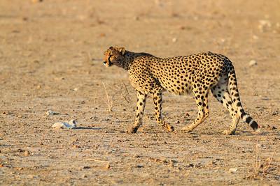 Ongava, Namibia