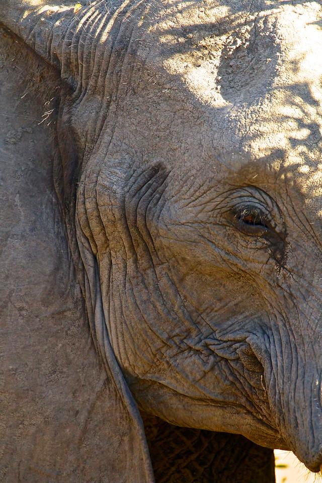 Sabi Sands Game Reserve<br /> South Africa, June 2014