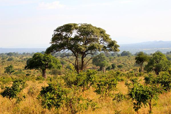 Tarangire Featured in the Thomson Safaris 2013 brochure