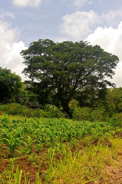 Tarangire, Tanzania