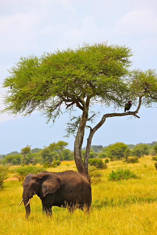 Tarangire Safari Tanzania, March 2012