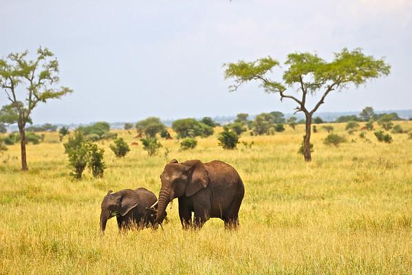 Tarangire National Park Tanzania, March 2012