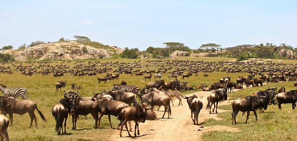 The Great Migration Featured in the Thomson Safaris 2013 Brochure