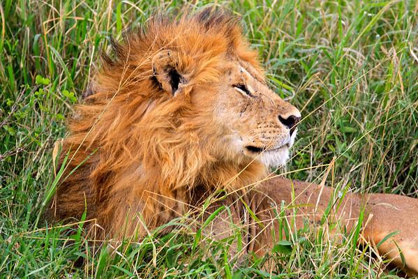 Serengeti, Tanzania March 2012