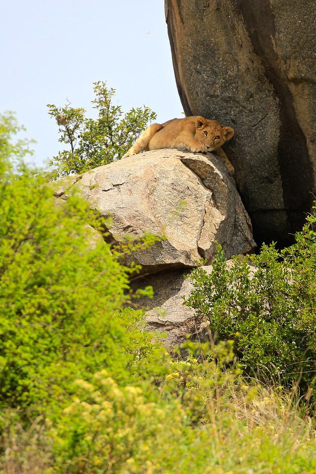 The Serengeti, Tanzania