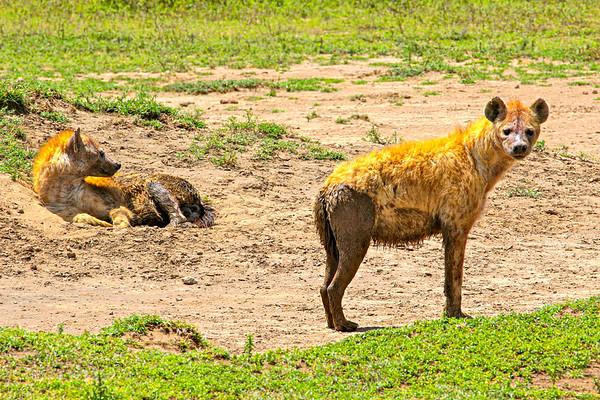 The Serengeti Tanzania, March 2012