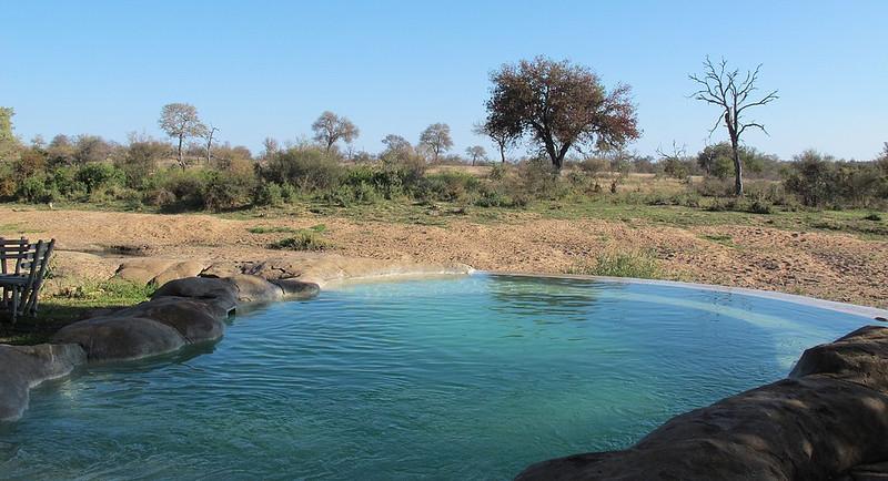 Motswari, the pool