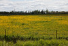 Field near Kapuskasing looking East.