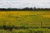 Field near Kapuskasing looking East.