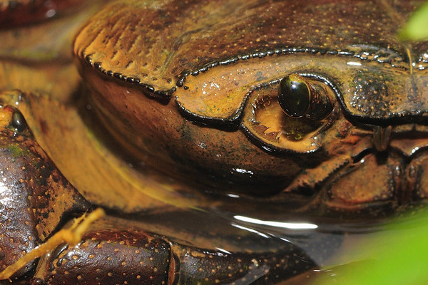 The look - Eye of a Crab ! ....