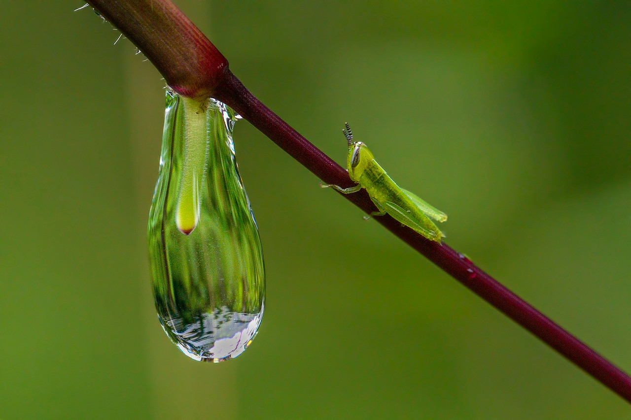 A rain drop and a grasshopper