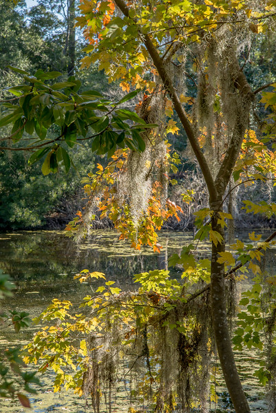 Airlie_Gardens_Wilmington_NC_14
