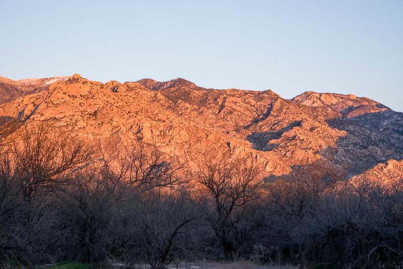 1035_Tucson_Saguaro_Gilbert_Ray