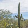 1043_Tucson_Saguaro_Gilbert_Ray