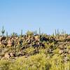 1054_Tucson_Saguaro_Gilbert_Ray