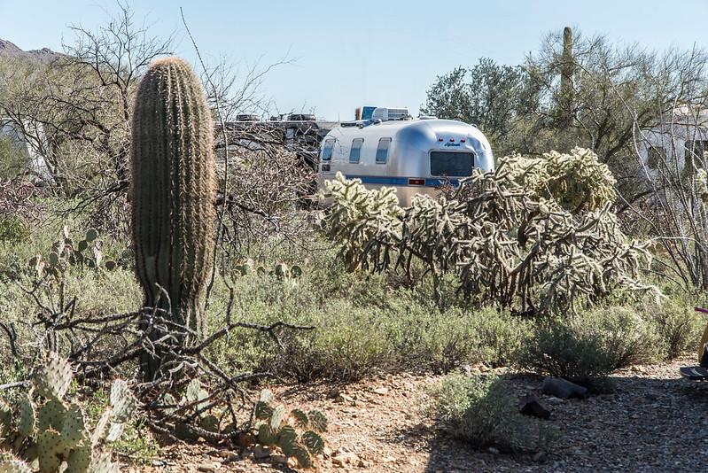 1047_Tucson_Saguaro_Gilbert_Ray