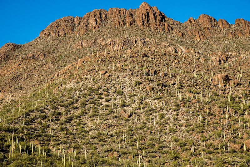 1053_Tucson_Saguaro_Gilbert_Ray