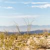 1001_Tucson_Saguaro_Gilbert_Ray