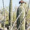 1063_Tucson_Saguaro_Gilbert_Ray