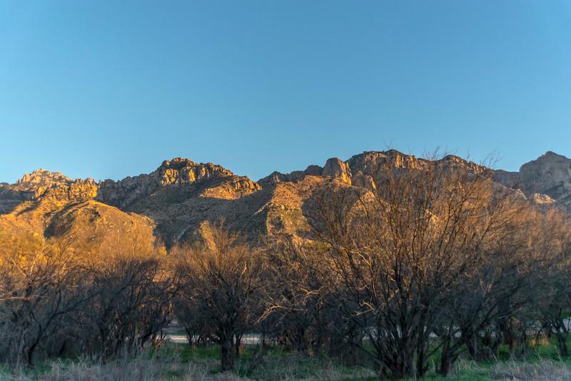 1029_Tucson_Saguaro_Gilbert_Ray