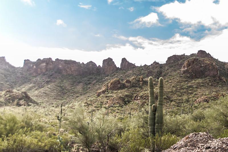 1015_Tucson_Saguaro_Gilbert_Ray
