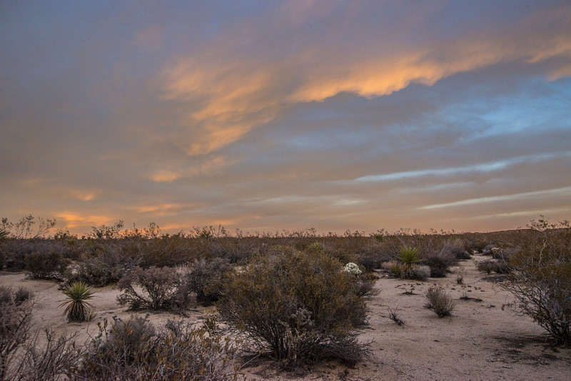 939_Joshua_Tree_Cottonwood