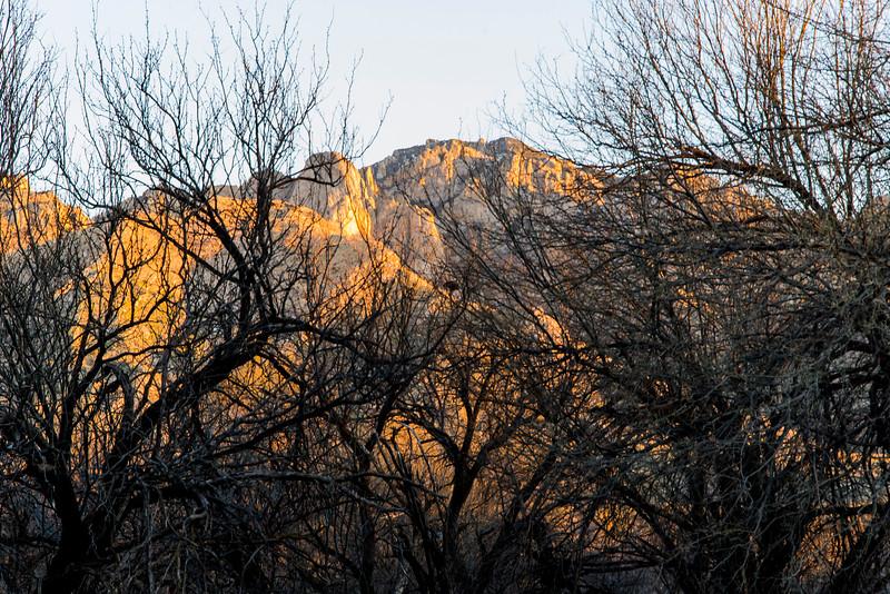 1033_Tucson_Saguaro_Gilbert_Ray