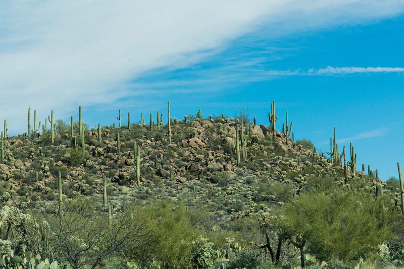 1051_Tucson_Saguaro_Gilbert_Ray